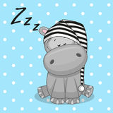 Sleeping Hippo. In a cap Royalty Free Stock Image