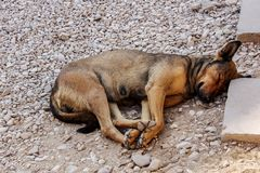 Sleeping homeles dog Stock Images
