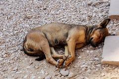 Sleeping homeles dog Stock Images