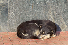 Sleeping homeless dog Stock Image