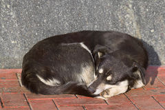 Sleeping homeless dog Stock Photos