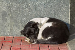 Sleeping homeless dog Royalty Free Stock Photo