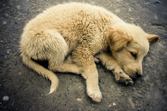 Sleeping homeless puppy. Stock Photos