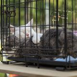Sleeping homeless white and grey adult cats cats from shelter for animals in a cage, expecting them to find kind owner. Sleeping homeless white and grey adult stock photo