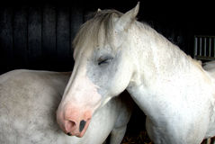 Sleeping horse. The horse is sleeping in the horse house Royalty Free Stock Images
