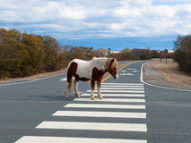 Sleeping horse on the road Royalty Free Stock Photography