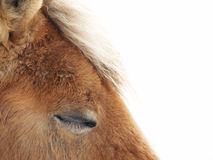 Sleeping horse (31) Stock Photo