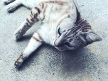 Sleeping house cat. On street royalty free stock image