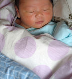 Sleeping infant. A sleeping infant in the quilt, comfortable Stock Images