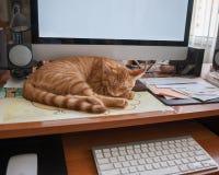 Sleeping on the job Royalty Free Stock Photo