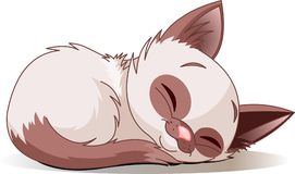 Sleeping kitten. Vector illustration of sleeping cute Siamese kitten Stock Image