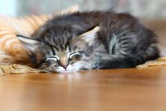 Free Sleeping Kitten Royalty Free Stock Photo - 183669575