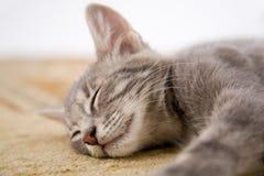 Sleeping kitten. On the carpet Royalty Free Stock Photography