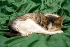 Sleeping Kitten. Sleeping on the Green Silk Cloth Kitten Royalty Free Stock Photo