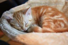 Sleeping kitten. Adorable pet, orange cat, cute animal, pretty feline, beautiful, nap Royalty Free Stock Photos