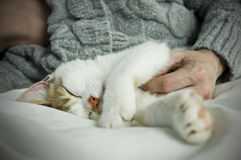Sleeping kitten on bed with owner Royalty Free Stock Image