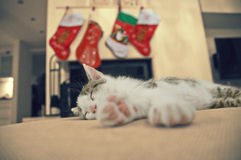 Sleeping Kitten, Christmas Time. Baby cat. A Christmas stocking for the pets, with cat toys. Kitten Stock Image