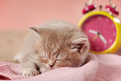 Sleeping kitten and clock Stock Photography