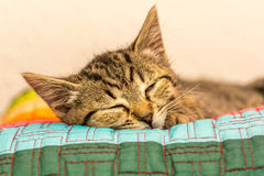 Sleeping kitten. On a color cushion Royalty Free Stock Photography