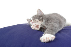Sleeping kitten on cushion Royalty Free Stock Image