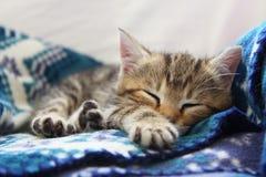 Sleeping kitten. Cute brown sleeping kitten with blue background Royalty Free Stock Photos