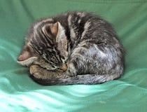 Sleeping kitten. Cute kitten sleeping on green chair Royalty Free Stock Photo