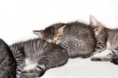 Sleeping kitten Stock Photos