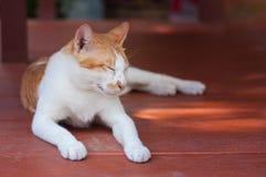 Sleeping kitten. Feeling relex on the wood plate Royalty Free Stock Image