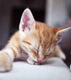 Sleeping kitten royalty free stock images