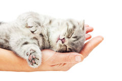 Sleeping kitten on hand Royalty Free Stock Photos