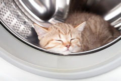 Sleeping kitten inside laundry washer Stock Images
