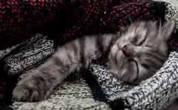 Sleeping kitten Royalty Free Stock Image