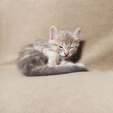 Sleeping  kitten  lying on bed Royalty Free Stock Photography