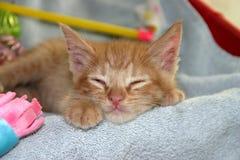 Sleeping Orange Tabby Kitten stock photo