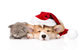 Sleeping kitten and Pembroke Welsh Corgi puppy with santa hat.  Stock Photography