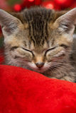 Sleeping kitten. With red decoration Royalty Free Stock Photo