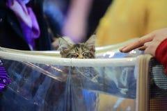 Sleeping kitten royalty free stock photography