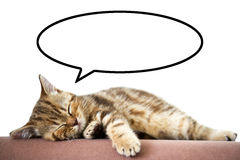 Sleeping kitten. On a white background Royalty Free Stock Image