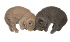 Sleeping Kittens Royalty Free Stock Image