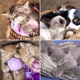 Sleeping kittens in basket Stock Photos