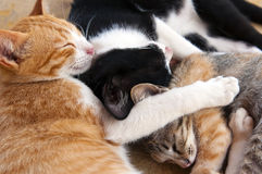 Sleeping kittens. Red-haired, white-black and tabby Royalty Free Stock Photography