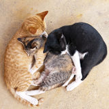 Sleeping kittens. Three sleeping kittens, red-haired, white-black and tabby Stock Photos