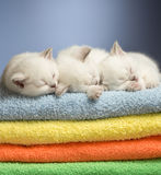 Sleeping kittens on towels Royalty Free Stock Image
