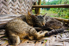 Sleeping Kittens. Two tabby kittens curl and cuddle up before going to sleep Royalty Free Stock Photos