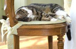 Sleeping kitty Royalty Free Stock Image