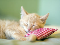 Sleeping Kitty Stock Photo