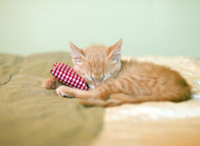Sleeping Kitty Stock Photography