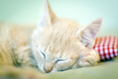 Sleeping Kitty with pillow Stock Photography