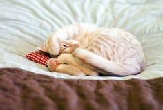 Sleeping Kitty with pillow Royalty Free Stock Photos