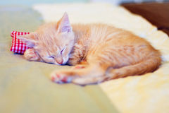 Sleeping Kitty with pillow Royalty Free Stock Images